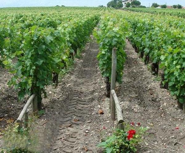 果园灌溉设备工程