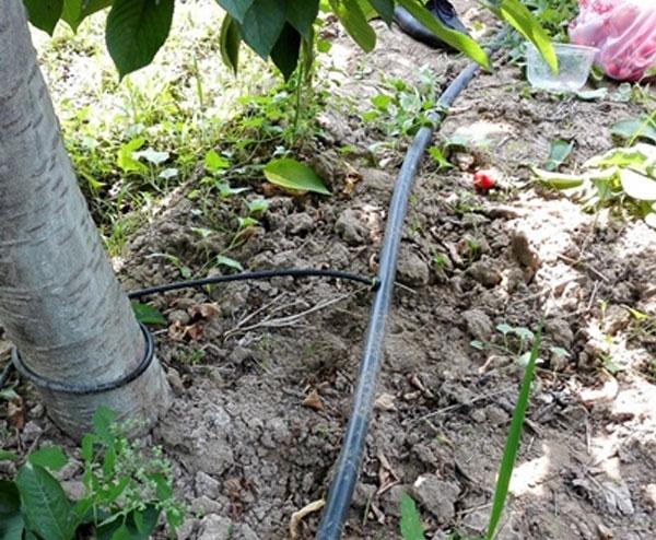 果园灌溉设备水肥一体化项目
