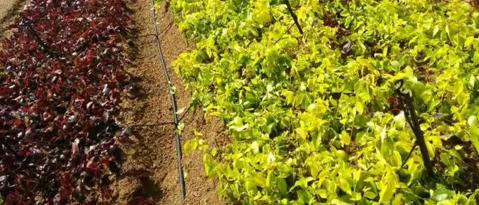 果园灌溉设备,膜下滴灌,大棚微喷设备,智能施肥机