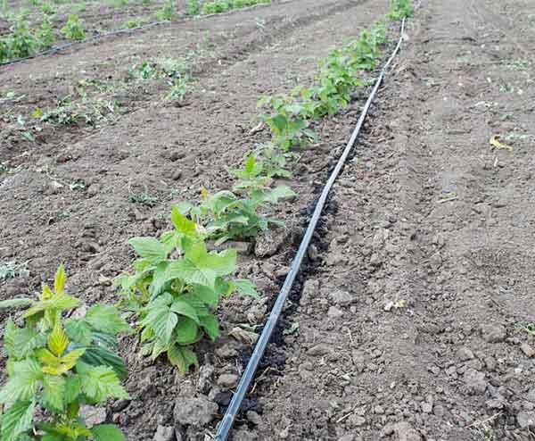 果园灌溉设备价格