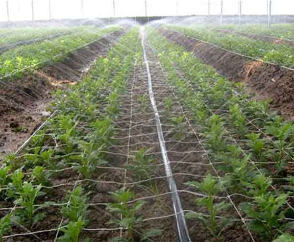 果园灌溉设备生产厂家