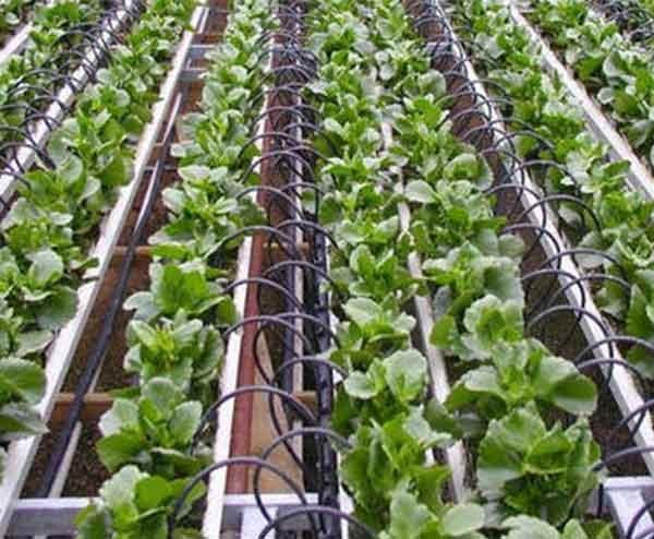 果园灌溉设备批发