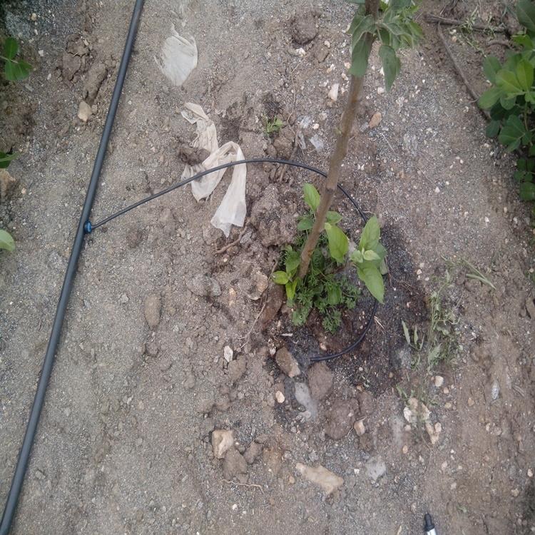 果树小管出流